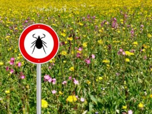Ticks & Lyme Disease - An Update with Kadeja Lefebvre, Naturopathic Practitioner @ From the comfort of your living room via Zoom